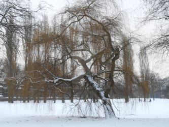 Weeping willow in the snow by tonks204