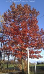The great red tree by Yugel