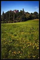 Dunster Meadow by Wivelrod