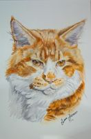 Maine Coon by Hei-La