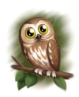 Northern Saw Whet Owl by falingard