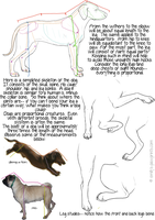 Dog proportions tutorial by mx-mouse