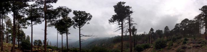 Misty Mt.Lemmon by rhesusmonkey
