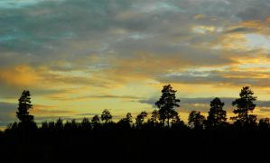 Forest Silhouette in Front of Sunset by MP-Tuomela