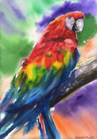 Macaw by GeorgeArt23