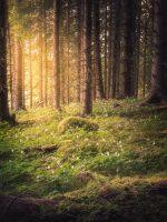 Spring forest by streamweb