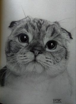 Kitteh by WhizzleBizzle