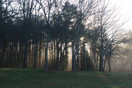 Sunshine Through Fog (Rock Hill, SC) by Nittany-Tiger