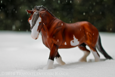 Blizzard by TR-Ranch