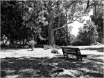 Park Bench. by AraujaPhoto