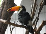 Toucan by XD-385