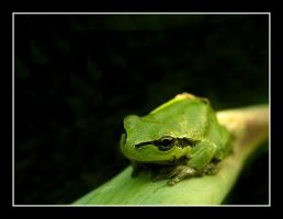 Little Frog by Sharon77Speeds