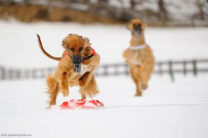 Snow-Coursing by Wolfruede