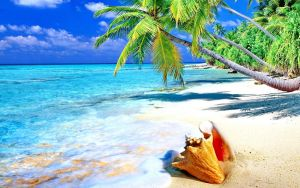 Tropical-sandy-beach-Shell-Ocean-with-turquoise-wa by D-A-Skelly