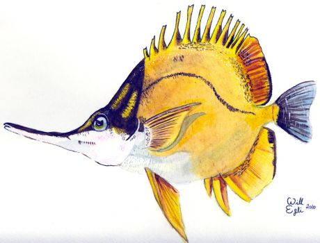 Forcepfish - Hawaiian Fish - Watercolor by SurfTiki