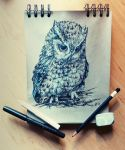 Daily sketch 1 - Eastern Screech Owl by Crateris
