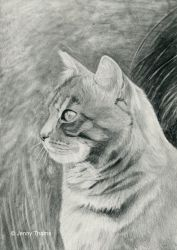 Tabby cat (pencil drawing) by JenThams