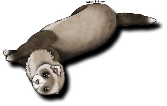 I Like Ferrets by ToothyGrins