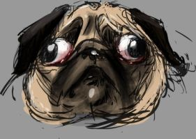 Hercules the Pug by GregoryRoth