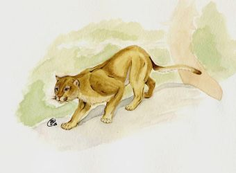 Cougar by Talpy