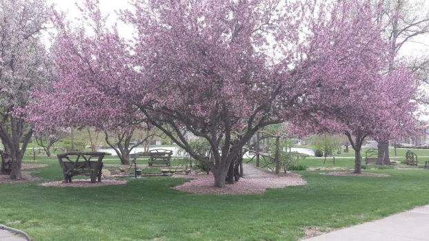 Pink Trees, Pink Mulch by TrystynAlxander