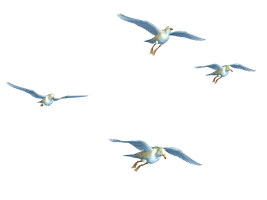 Flying Birds 01 PNG Stock by Roy3D