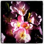 Late Bloomers 01 by inforcer