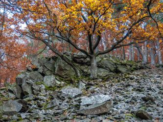 Autumn oaks and rocks at dawn,  Daudenberg, #1 by zeitspuren