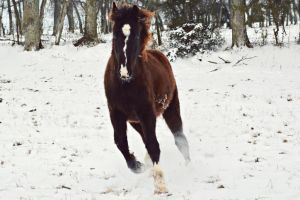 TWH in snow by CaballineCreations
