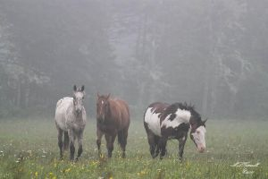 horse in the fog by ogiedomane