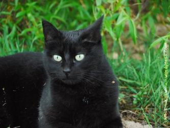 My Black Cat in the garden 004 by mickwouai