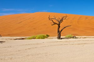 orange sand and tree stock by stockf8