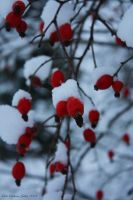 Red and white by deadvittra