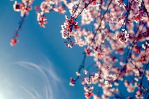 Spring2 by Shzphoto