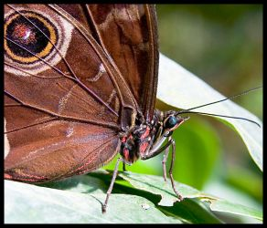 Butterfly2 by carpetmankent
