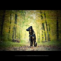 Leo In The Autumn Forest by DREAMCA7CHER