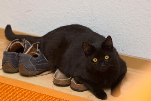 Leo guards my shoes by mprangenberg