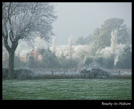 Cold And Frosty Morning by Beauty-In-Nature
