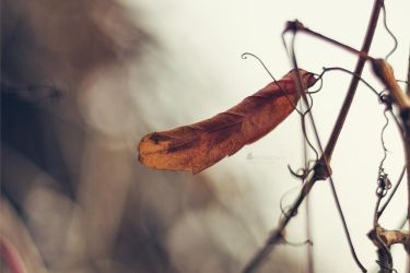 Feathers of Autumn by Photometheus