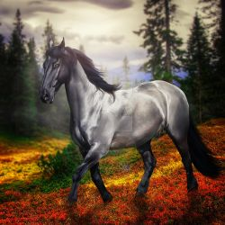 blue stroll HEE premade by VIP-EquineArt