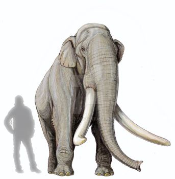 Southern mammoth from museum of Stavropol by DiBgd