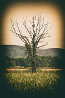 Tree by BlackRoomPhoto
