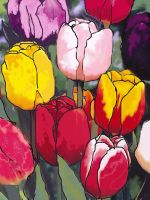 Tulips 3 by angeloaguinaldo