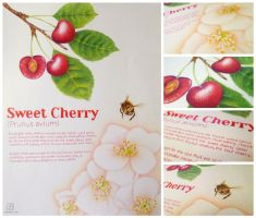 Botanical Illustration - Cherries by electrifried