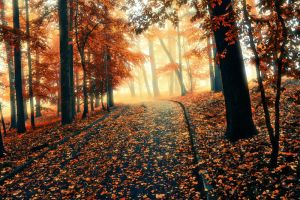Just Another Autumn Shot by barniGR