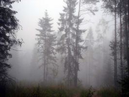 Forest 1001 by MASYON