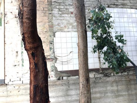 Trees and tiles by dpt56