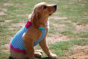 Puppy Dress-Up by Water-Ferret