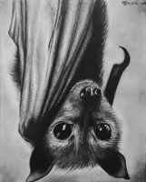 Fruit Bat by kbauerart