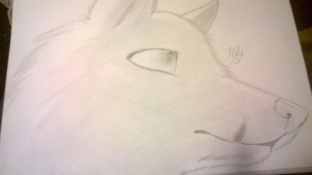 Wolf sketch by halothekittycat